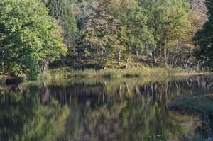 大平沼の湖畔2
