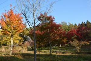 10.23 カエデの森紅葉全景
