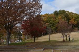 野草の丘の紅葉左