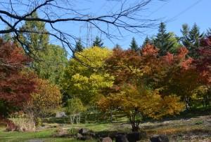 カエデの森の紅葉左