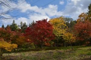 カエデの森の紅葉2