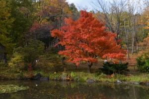 ひょうたん池の紅葉