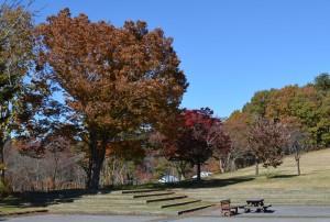 野草の丘の紅葉 左
