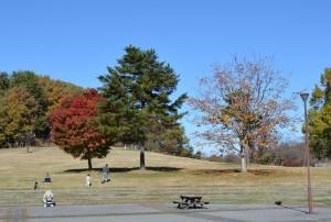 野草の丘の紅葉 右